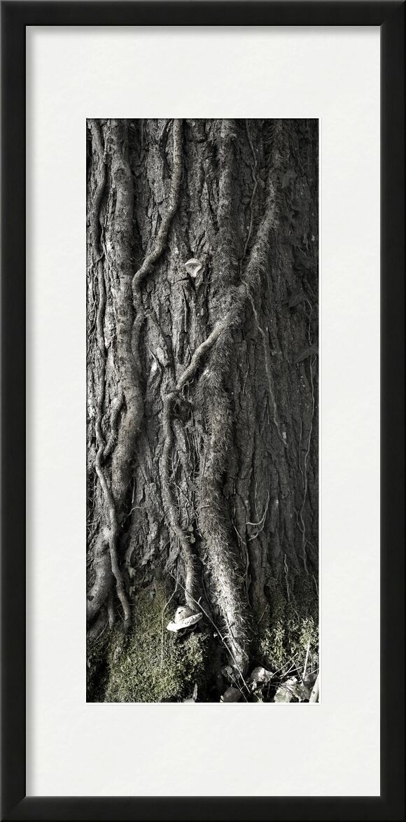 UNDER YOUR SKIN 2 from jean michel RENAUDIN, Prodi Art, material, Ivy, trunk, forest, tree, matter, alive, living, bark