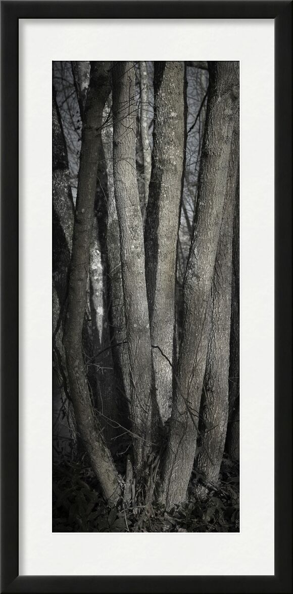 UNDER YOUR SKIN 1 from jean michel RENAUDIN, Prodi Art, material, Ivy, trunk, forest, tree, matter, alive, living, bark
