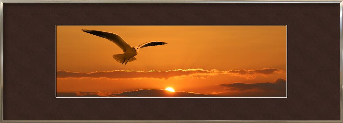Flight of the seagull from Pierre Gaultier, Prodi Art, banner, header, gull, bird, fly, clouds, orange, sunset, Sun, ease