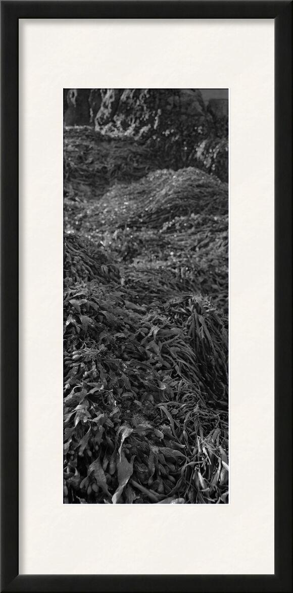 The mountain is in my garden 3 from jean michel RENAUDIN, Prodi Art, weeds, vegetable, ecology, herbs, nature, wild herbs, plant, ecology, herbs, garden, wild, garden