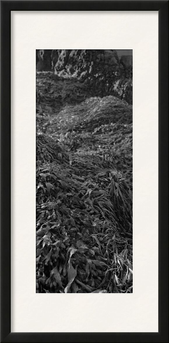 La montagne est dans mon jardin 3 de jean michel RENAUDIN, Prodi Art, herbes folles, légume, écologie, herbes, nature, herbes sauvages, plante, écologie, herbes, jardin, sauvage, jardin