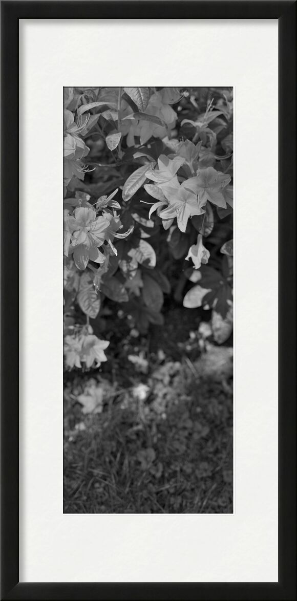 The mountain is in my garden 4 from jean michel RENAUDIN, Prodi Art, wild, garden, plant, wild herbs, nature, herbs, ecology, vegetable, weeds