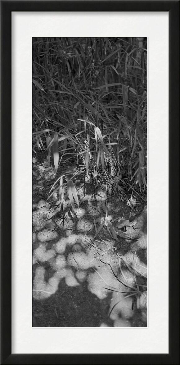 The mountain is in my garden 5 from jean michel RENAUDIN, Prodi Art, wild herbs, plant, ecology, herbs, garden, wild, weeds, vegetable, ecology, herbs, nature, garden