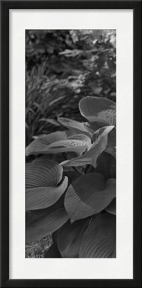La montagne est dans mon jardin 8 de jean michel RENAUDIN, Prodi Art, herbes folles, légume, écologie, herbes, nature, sauvage, jardin, herbes, écologie, plante, herbes sauvages, jardin
