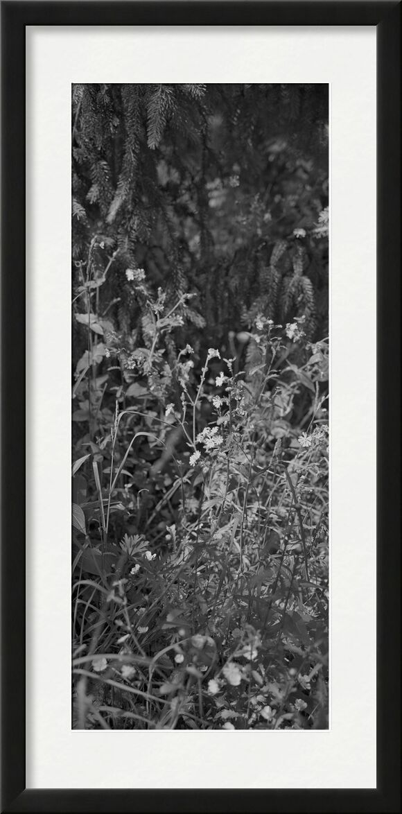 La montagne est dans mon jardin 13 de jean michel RENAUDIN, Prodi Art, jardin, herbes sauvages, plante, écologie, herbes, jardin, sauvage, herbes folles, légume, écologie, herbes, nature
