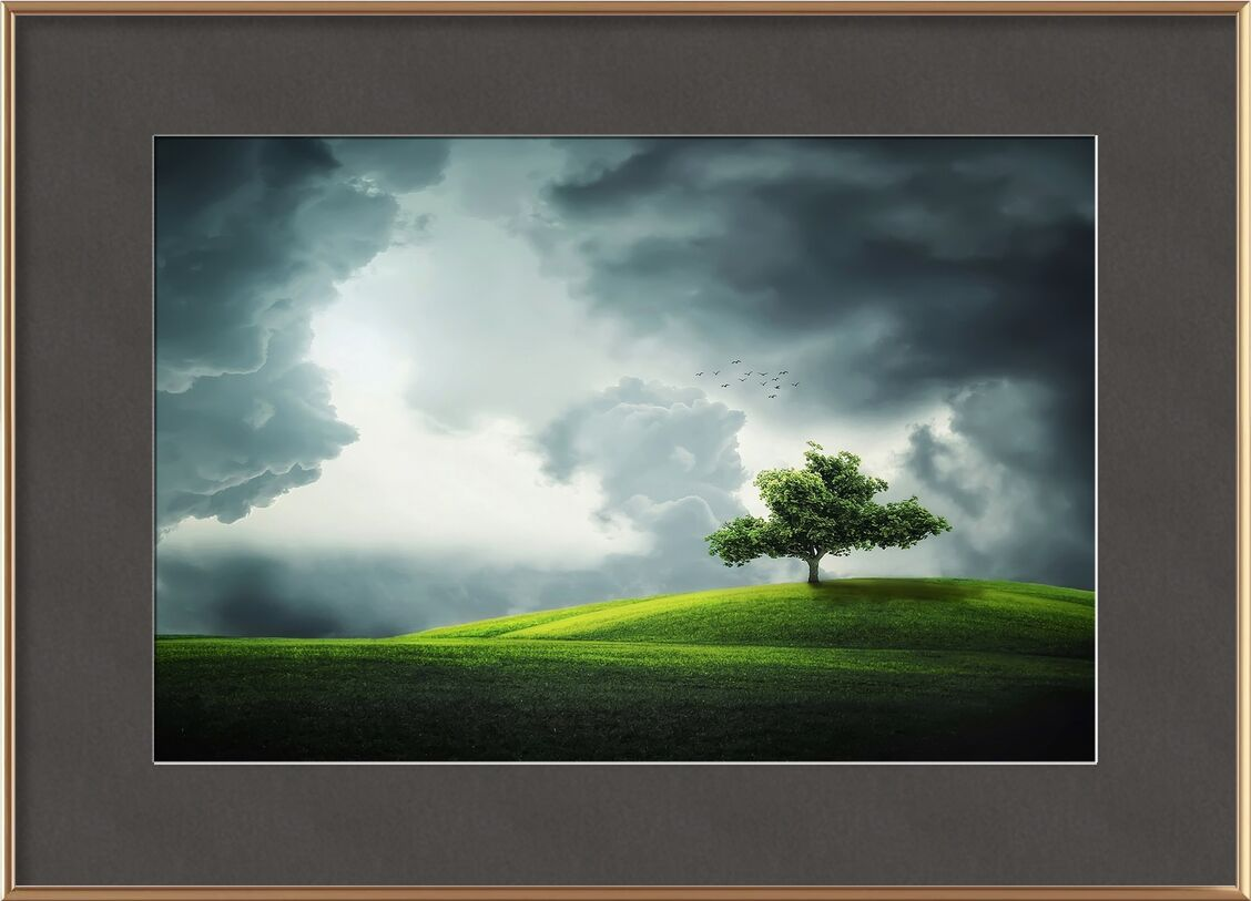 The tree from Pierre Gaultier, Prodi Art, tree, birds, lands, landscape, flower, season, plant, summer, love, cute, natural, nature, design, animal, forest, floral, park, grass, green