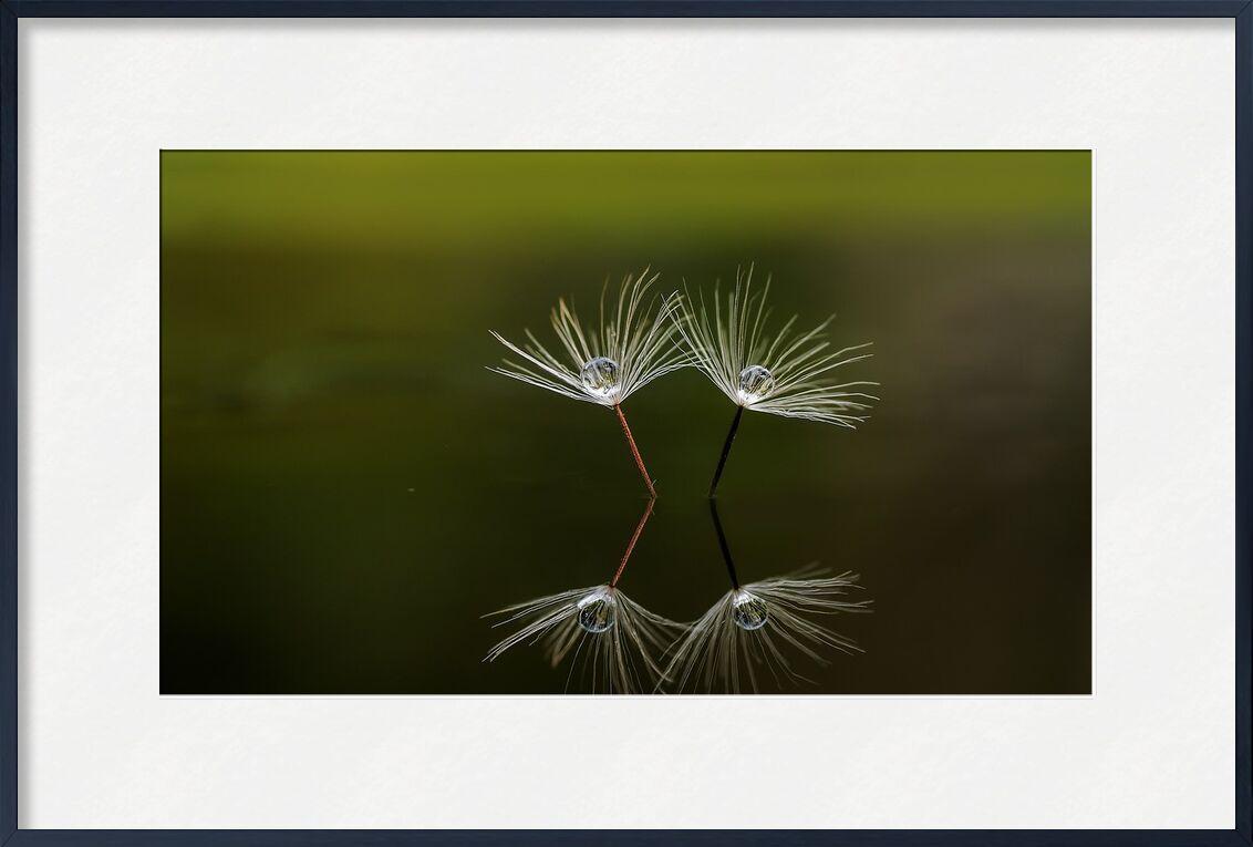 Peaceful nature from Pierre Gaultier, Prodi Art, pier, wooden, lake, ocean, sea, quiet, fog, calm, tranquil, mist, nature, landscape, scenic, scenery, outdoors, peace