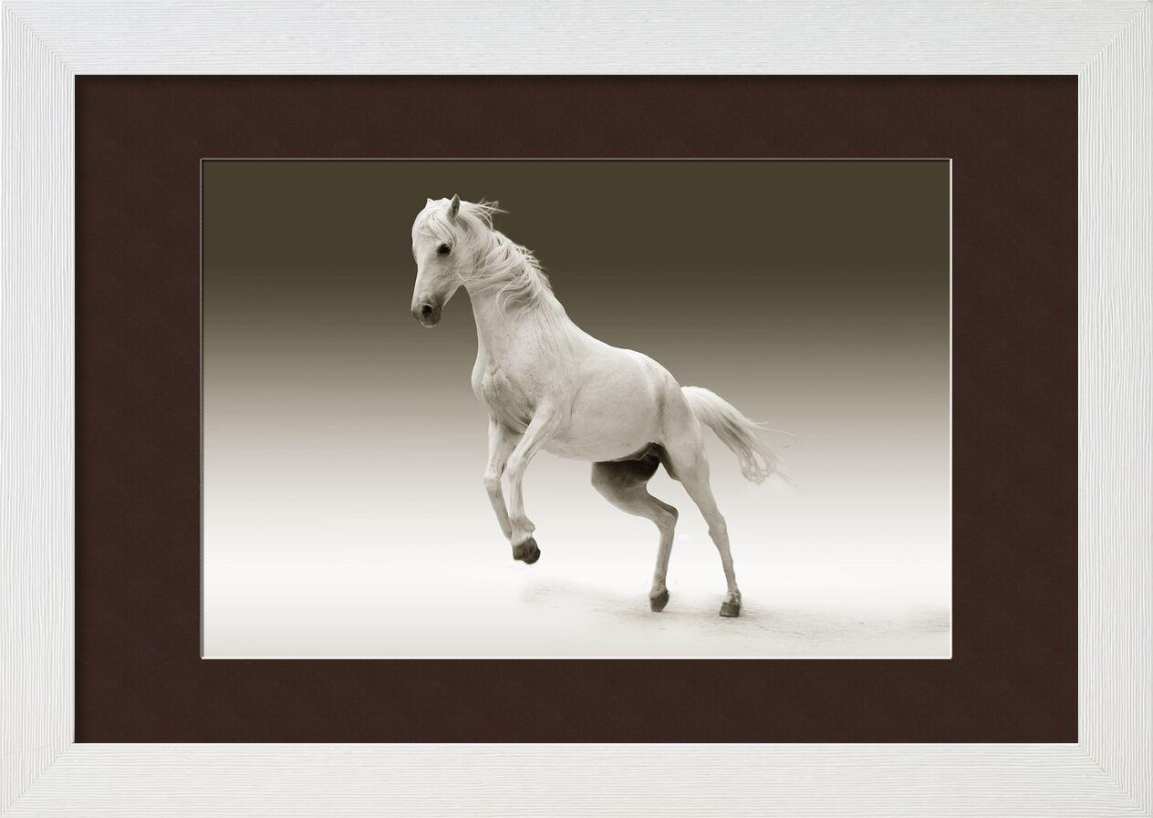 Horse from Pierre Gaultier, Prodi Art, horse, mare, animal, nature, ride, coupling, pasture, mold, mammal, pferdeportrait, horse head, eye, white, horse, wildlife, equestrian, mane