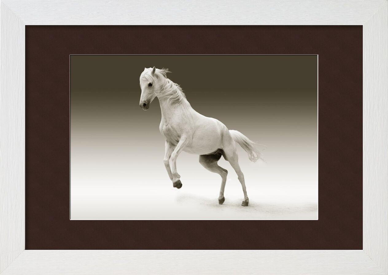 Cheval de Pierre Gaultier, Prodi Art, cheval, jument, animal, nature, balade, couplage, pâturage, moule, mammifère, pferdeportrait, tête de cheval, œil, blanc, cheval, faune, équestre, crinière