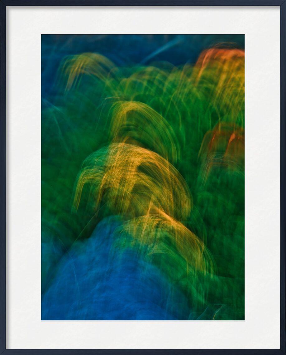 Les graminées colorées de Céline Pivoine Eyes, Prodi Art, plante, nature, fleur, Salin, gruissan, Graminées, ICM, Mouvement intentionnel de la caméra, flou artistique, art abstrait, Photographie abstraite