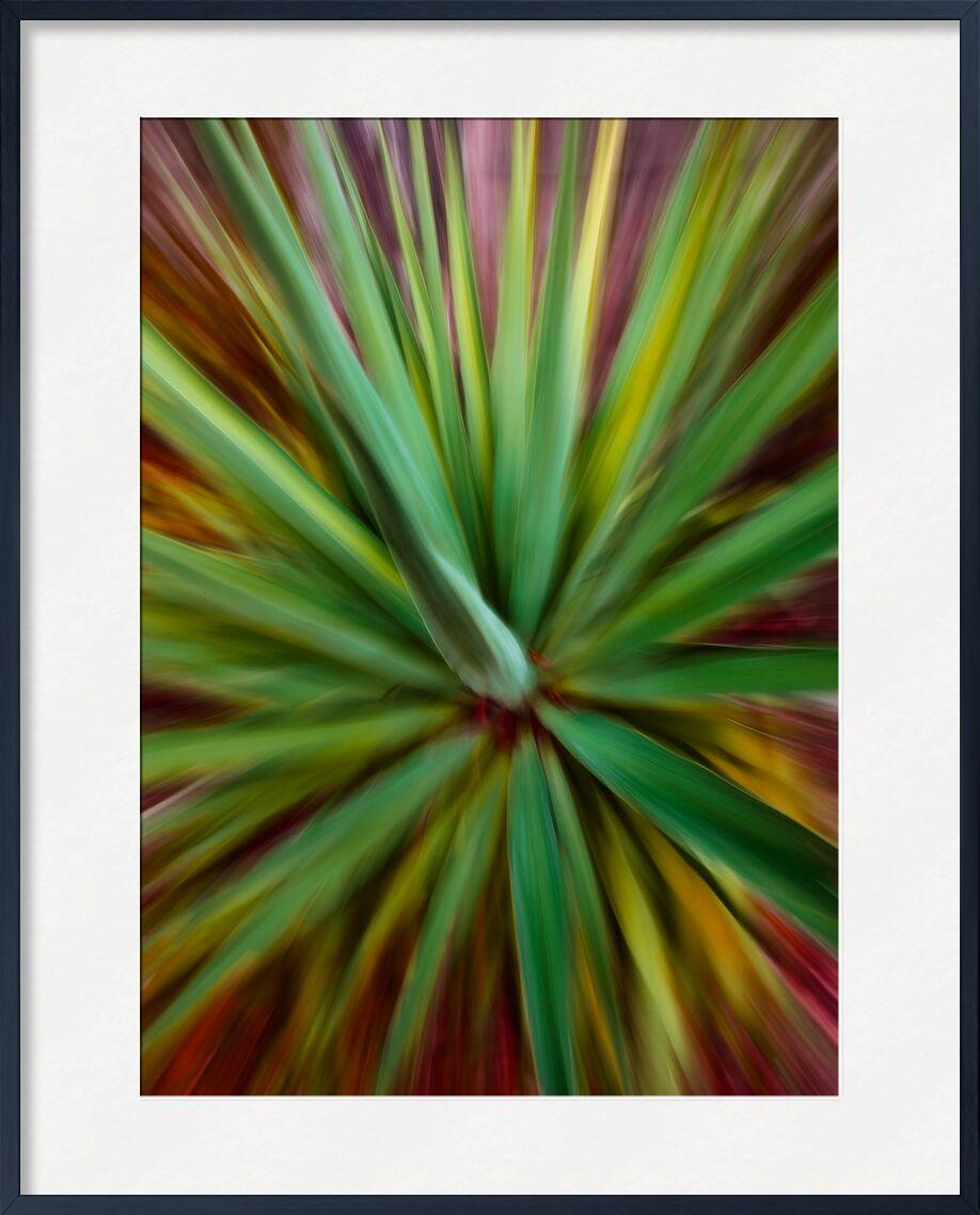 Le yucca de Céline Pivoine Eyes, Prodi Art, vert, fleurs, plante, paysage, nature, Photographie abstraite, art abstrait, flou artistique, Mouvement intentionnel de la caméra, ICM, Yucca