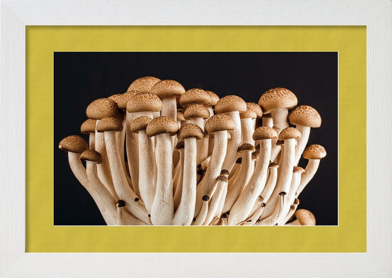 Our mushrooms from Pierre Gaultier, Prodi Art, vegetable, raw, plant, organic, mushrooms, ingredients, healthy, fresh, food, edible, delicious, champignon, Boletus