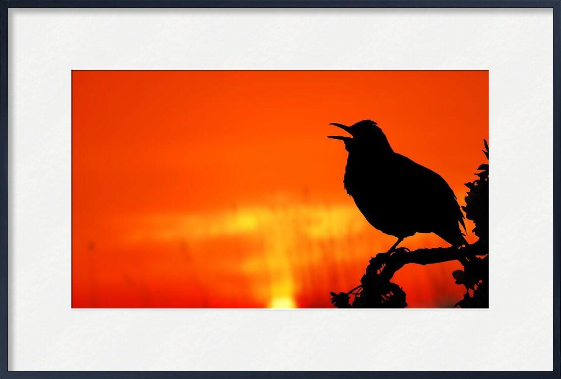 The silhouette of the bird from Pierre Gaultier, Prodi Art, animal, backlit, bird, dawn, dusk, evening, light, nature, outdoors, perched, silhouette, Sun, sunrise, sunset, tree, twilight