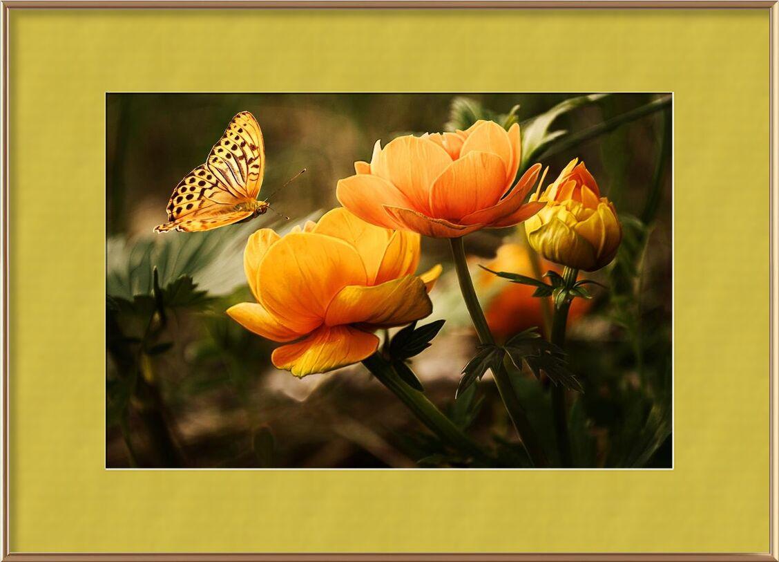 Le papillon et sa plante de Pierre Gaultier, Prodi Art, Floraison, fleurs, papillon, fleurs, jardin, insecte, nature, Orange, plante