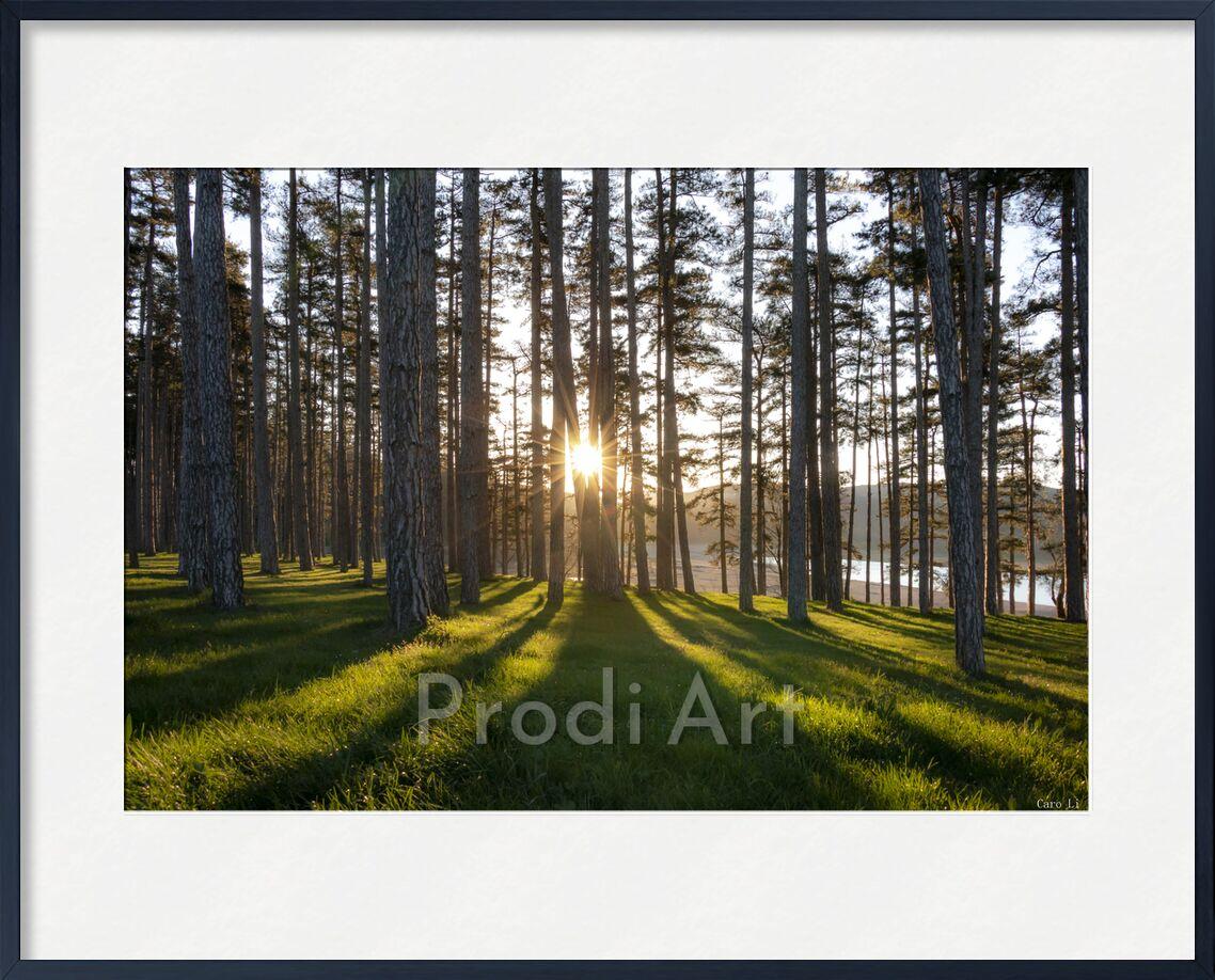 Harmonie de Caro Li, Prodi Art, paysage, paysage, arbre, soleil, soleil, levé de soleil, lever du soleil, arbre