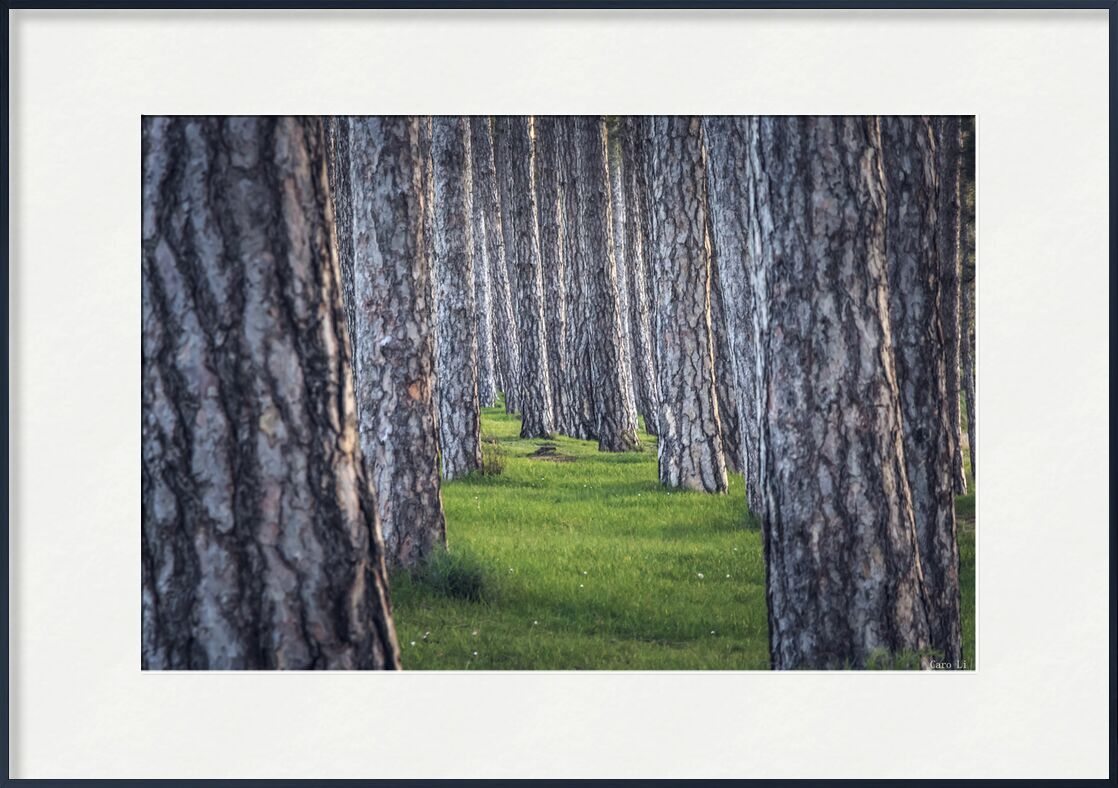 Plénitude de Caro Li, Prodi Art, paysage, paysage, Photographie, arbres, arbre