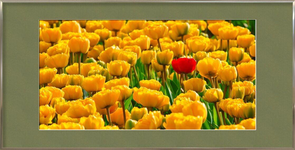 Fields of tulips from Pierre Gaultier, Prodi Art, bloom, blossom, flora, flowers, plants, spring