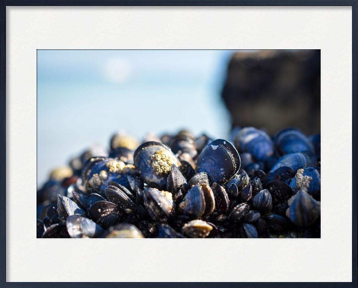 Petites Moules de Loïse Raoult, Prodi Art, moules, détails, mer, océan, plage, macro, nature, bretagne