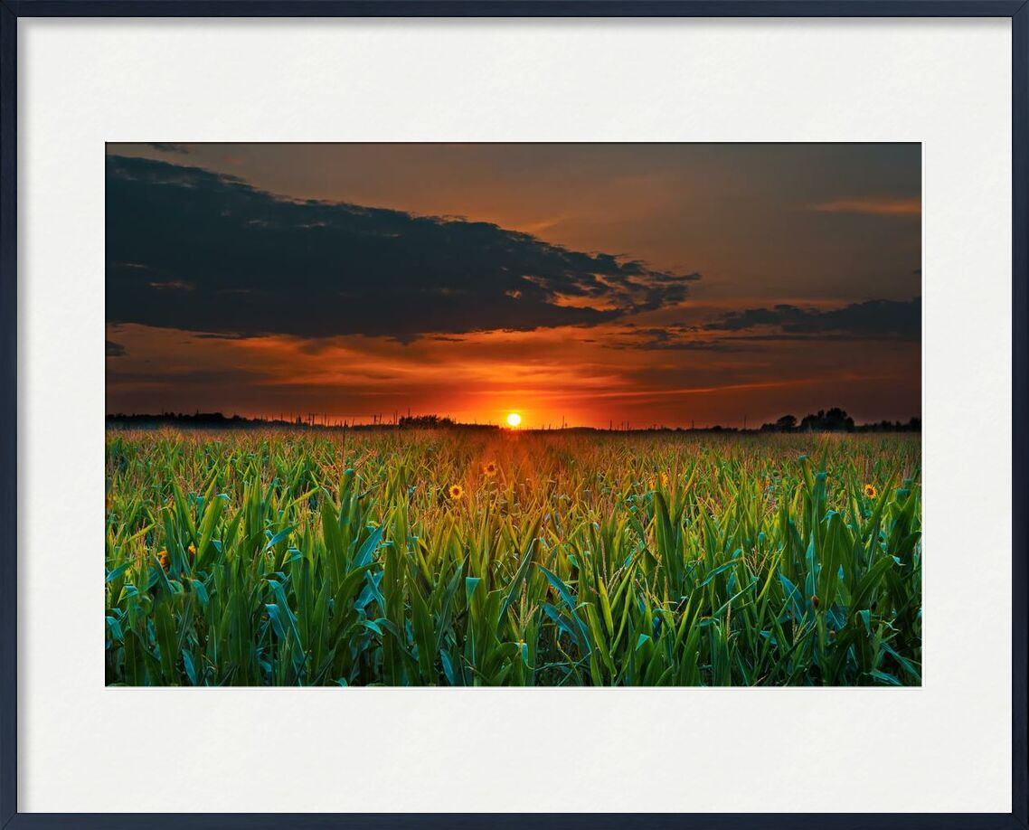 Crépuscule de Aliss ART, Prodi Art, surgir, champ de maïs, blé, couché de soleil, tournesols, soleil, été, ciel, rural, en plein air, nature, paysage, croissance, herbe, fleurs, champ, les terres agricoles, ferme, soir, crépuscule, Aube, terres cultivées, campagne, nuages, agriculture