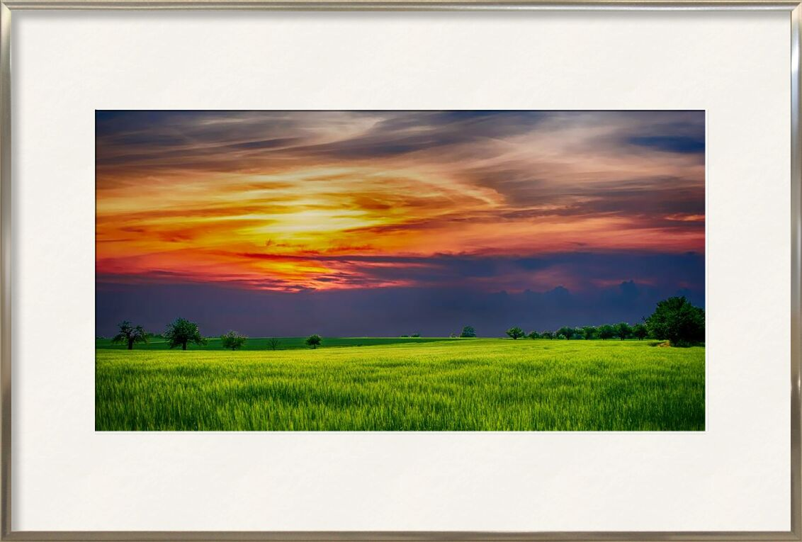 Sunset from Aliss ART, Prodi Art, trees, sunlight, Sun, sky, scenic, rural, outdoor, nature, landscape, growth, grass, field, farmland, cropland, countryside, country, clouds, agriculture