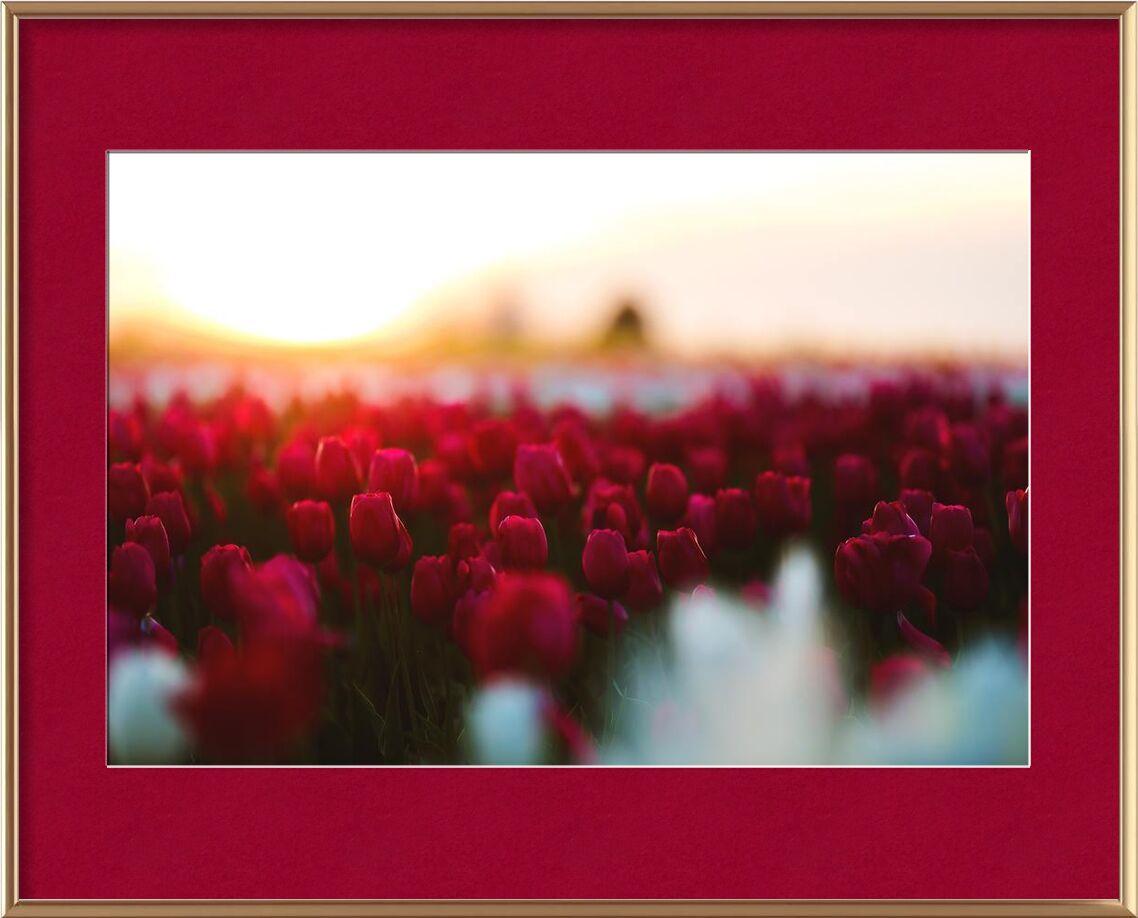 Rouge tulipe from Aliss ART, Prodi Art, beautiful, bloom, blooming, blossom, depth of field, field, flora, flower, flowers, garden, , nature, petal, petals, plant, red, season, tulip, tulips, rose wallpaper