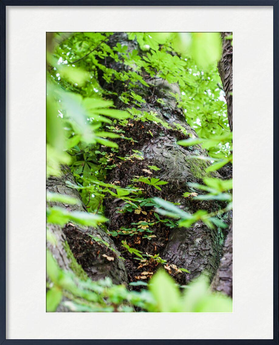 Voyage au coeur de la Nature from Marie Guibouin, Prodi Art, tree, nature, leaves, forest, marie guibouin, bark