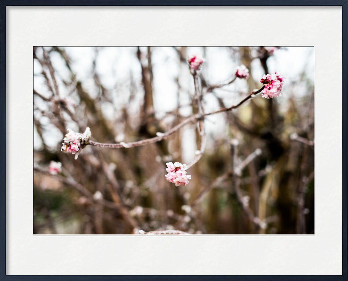Douceur hivernale de Marie Guibouin, Prodi Art, nature, hiver, rose, marie guibouin, arbre, bourgeon