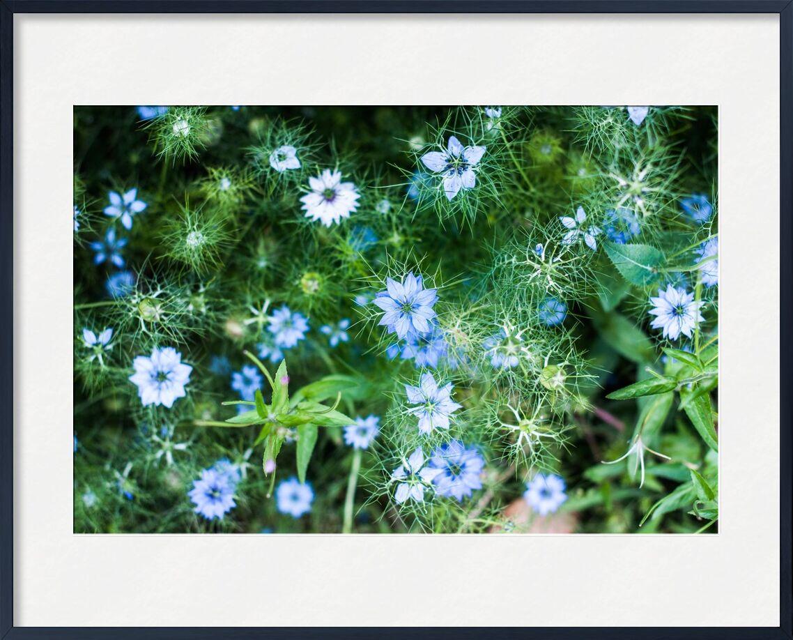 Blue flowers de Marie Guibouin, Prodi Art, fleur bleue, marie guibouin, nature, fleurs, vert