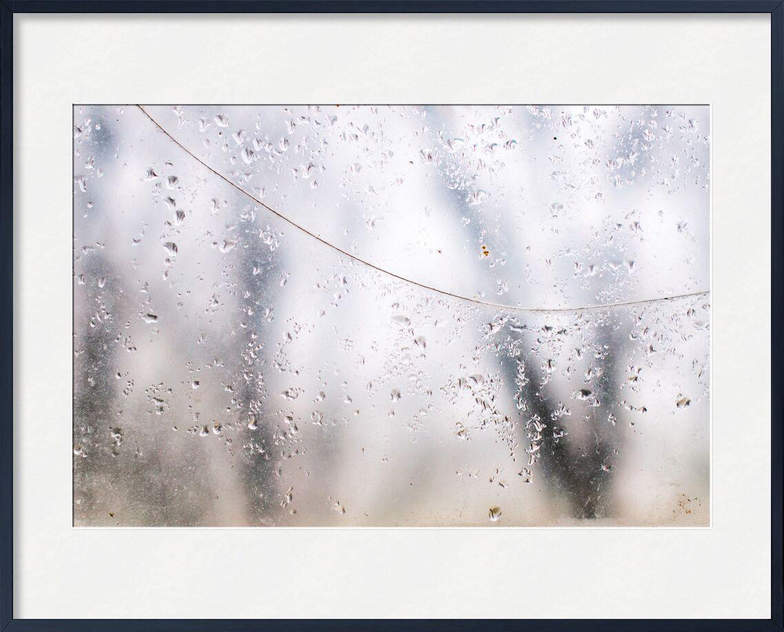 Derrière le voile des apparences from Marie Guibouin, Prodi Art, nature, trees, forest, water drops, water, window, marie guibouin, rain