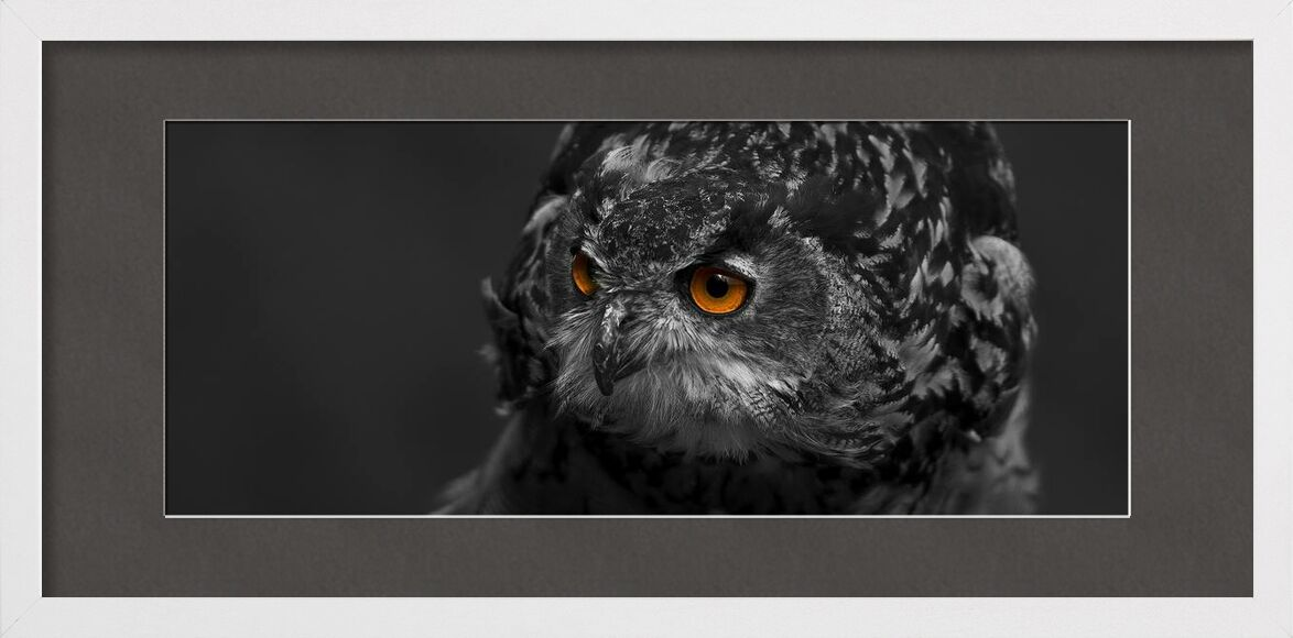 Owl's eyes from Pierre Gaultier, Prodi Art, animal, avian, beak, bird, bird of prey, black-and-white, close-up, eagle, eagle owl, eyes, falconry, feather, feathers, hawk, hunter, looking, nocturnal, outdoors, owl, perched, plumage, portrait, predator, prey, raptor, selective, color, staring, wild, wildlife, zoo