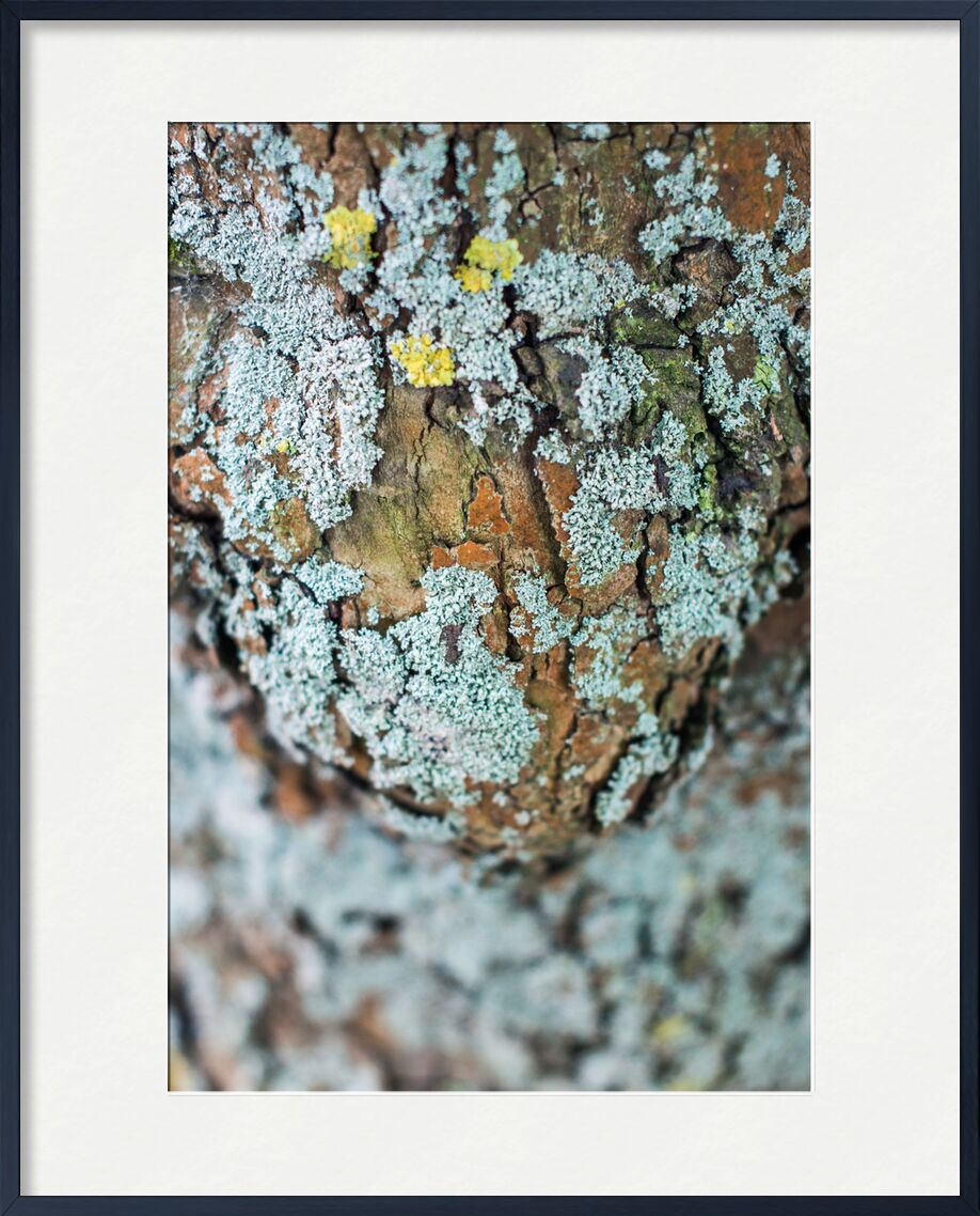 Porter la vie de Marie Guibouin, Prodi Art, ventre, enceinte, grossesse, marie guibouin, nature, écorce, arbre