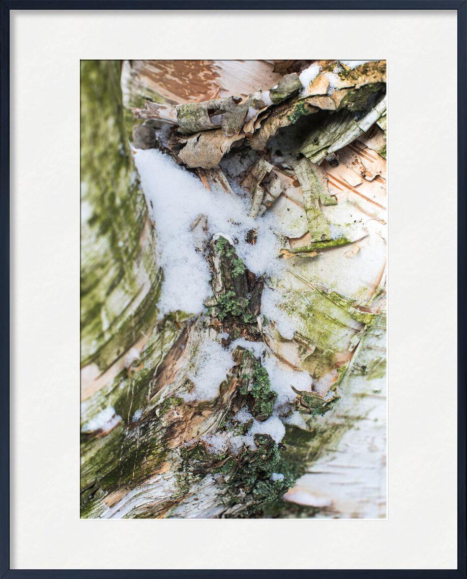 Pureté divine de Marie Guibouin, Prodi Art, écorce, vert, pureté, blanc, nature, arbre, neige, hiver, marie guibouin