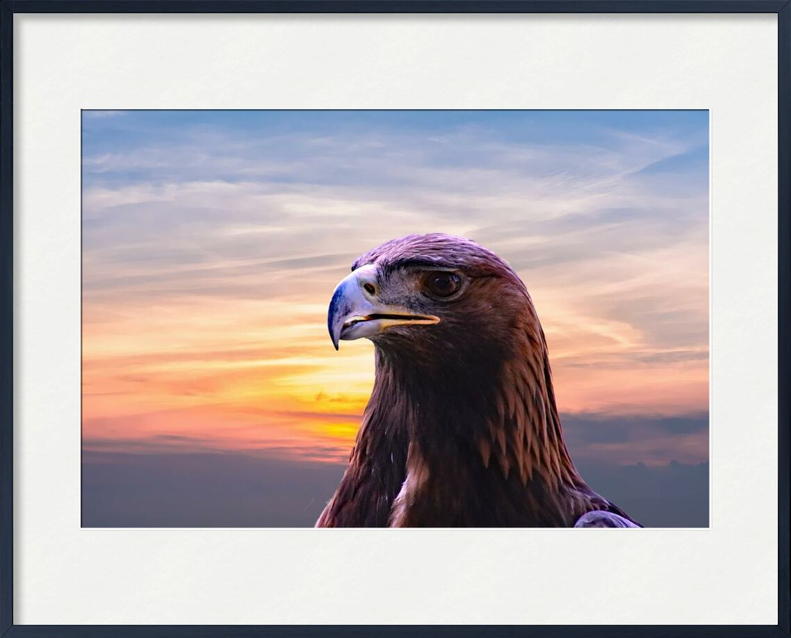 Head of the Eagle from Pierre Gaultier, Prodi Art, wildlife, wild, sky, raptor, prey, predator, portrait, outdoors, nature, hunter, head, flight, feather, falconry, hawk, eagle, clouds, close-up, bird, beak, bald eagle, animal