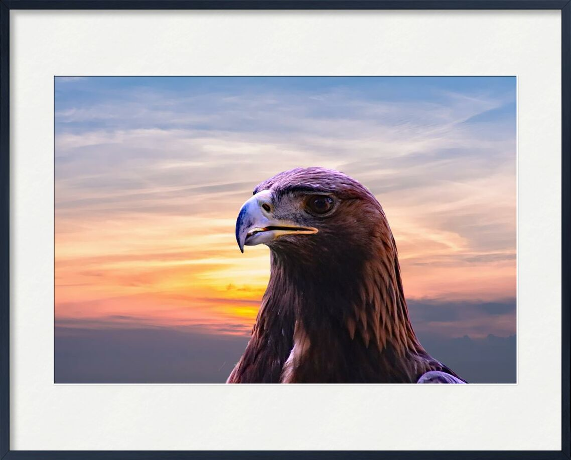 Tête de l'aigle de Pierre Gaultier, Prodi Art, faune, sauvage, ciel, rapace, proie, prédateur, portrait, en plein air, nature, chasseur, tête, vol, plume, fauconnerie, faucon, aigle, nuages, gros plan, oiseau, le bec, Aigle chauve, animal