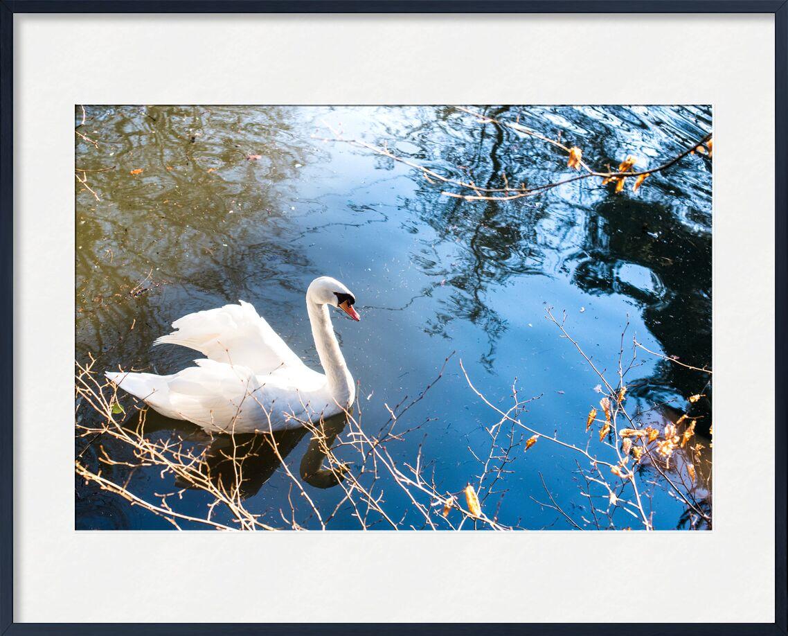 C'est un signe ! from Marie Guibouin, Prodi Art, Swan, lake, marie guibouin, water, sign, blue