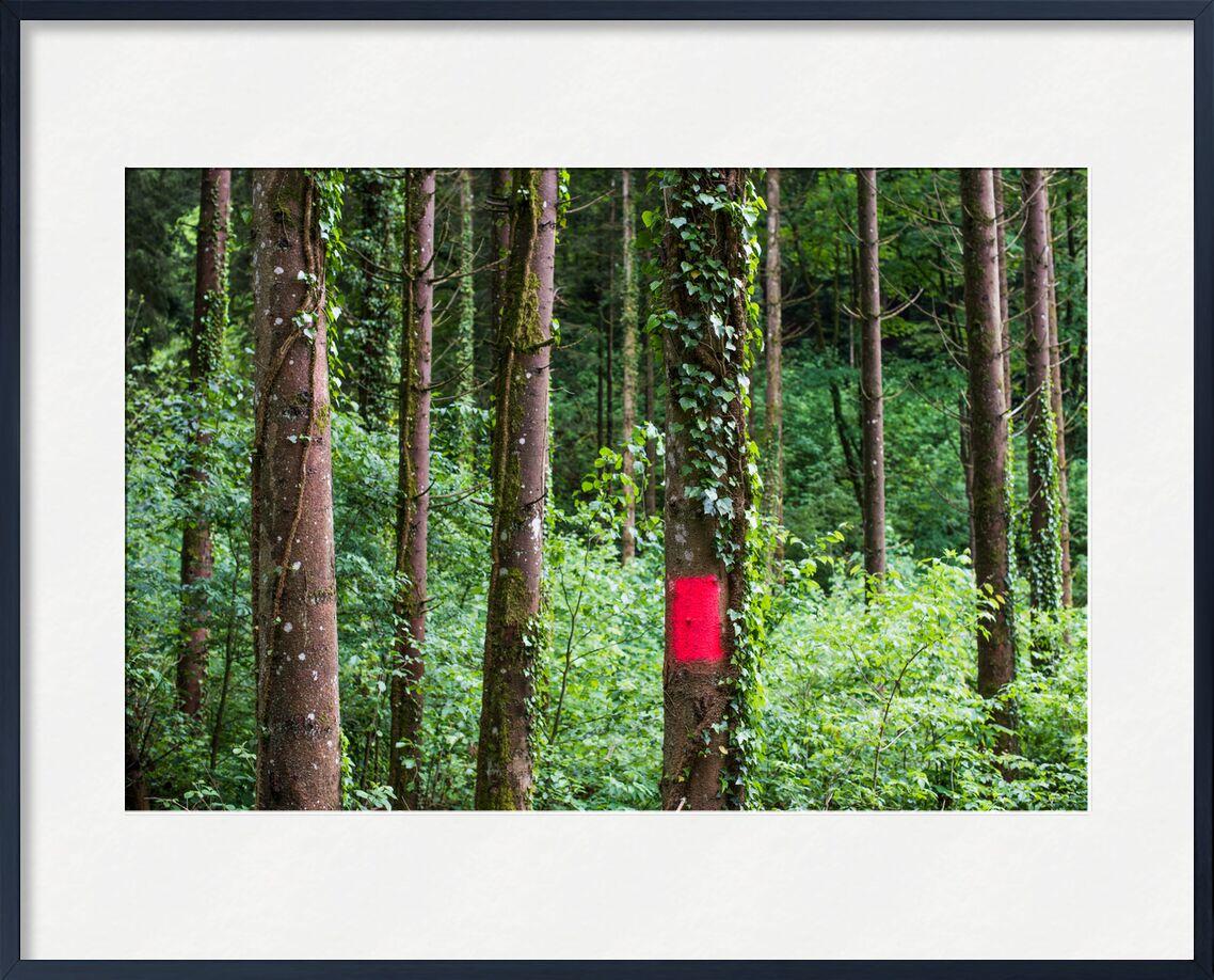 Zone rouge de Marie Guibouin, Prodi Art, nature, arbres, vert, randonnée, marie guibouin, bois, forêt, rouge