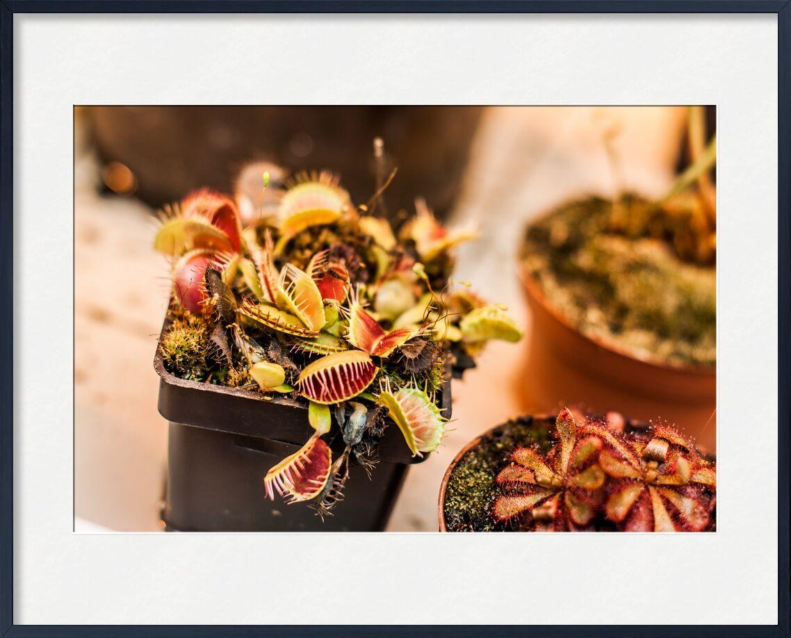 Plantes carnivores - serre tropicale de Marie Guibouin, Prodi Art, plantes carnivores, nantes, machines de l'ile, art, nature, plantes, plante