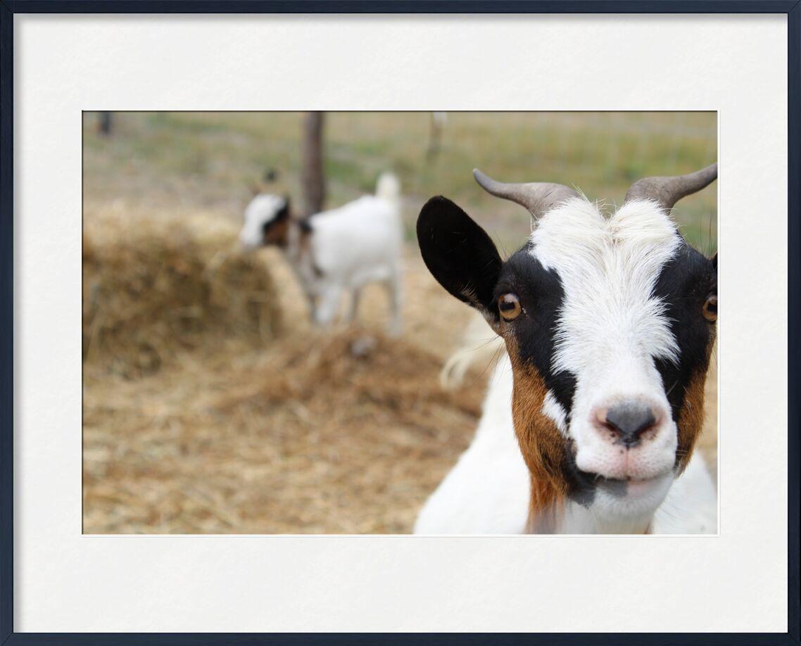 Biquettes de jenny buniet, Prodi Art, animaux, chèvre, biquette