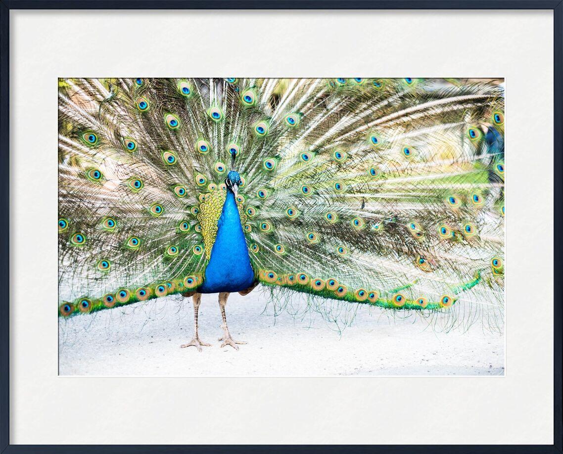 Ose offrir au monde la Beauté de ton Âme de Marie Guibouin, Prodi Art, grandiose, connexion au monde, paon qui fait la roue, beauté, nature, spiritualité, âme, marie guibouin, paon