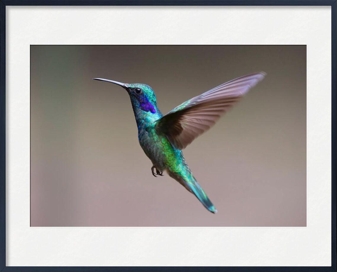 Le colibri de Pierre Gaultier, Prodi Art, animal, aviaire, le bec, oiseau, brouiller, gros plan, Couleur, coloré, lumière du jour, exotique, plumes, concentrer, colibri, iridescent, peu, en plein air, plumage, côté, vue, sauvage, faune, ailes