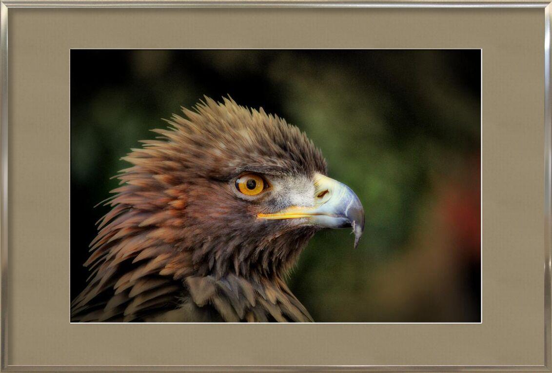 Royal Bird from Pierre Gaultier, Prodi Art, plumage, macro, close-up, bird, animal photography, animal