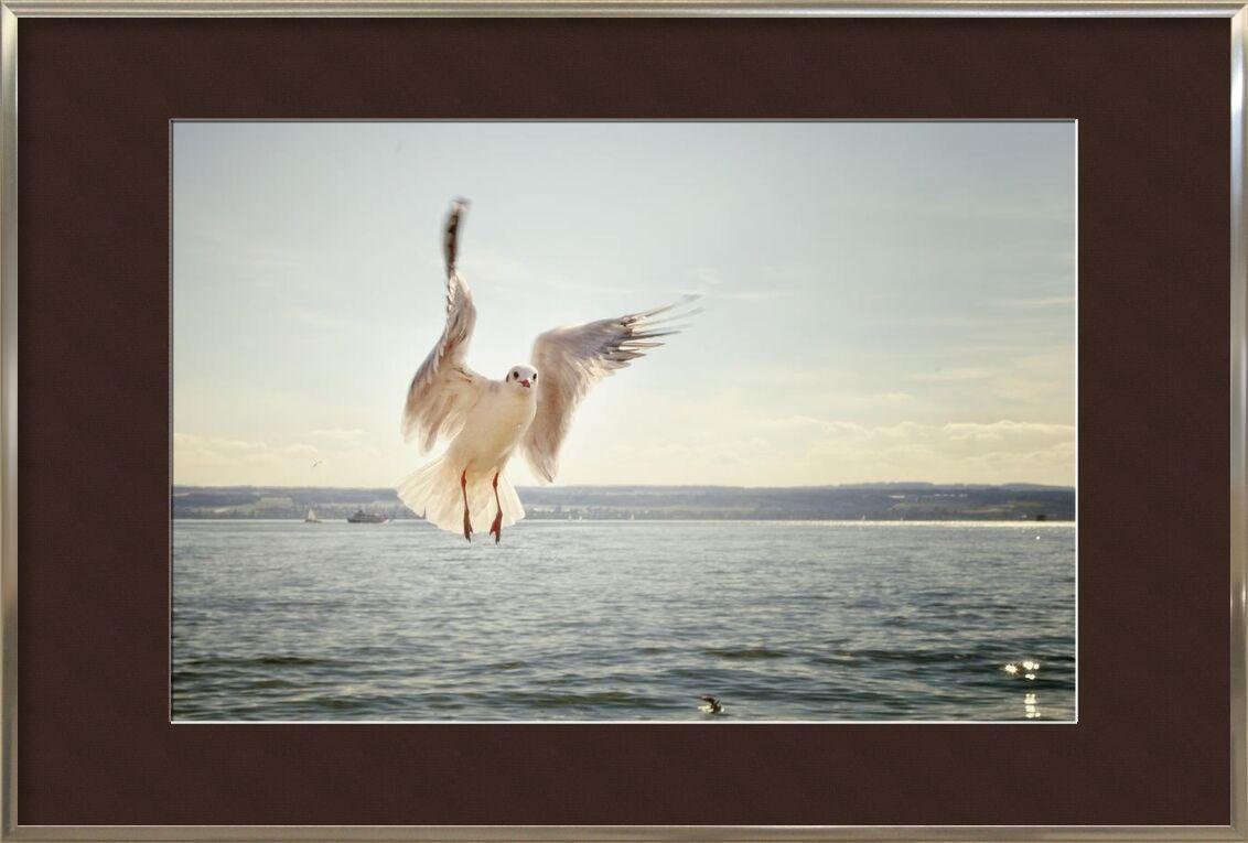 L'approche de la mouette de Pierre Gaultier, Prodi Art, oiseau, en volant, mouette, océan, mer, mouette, eau