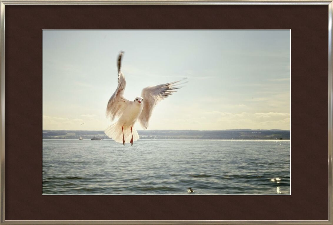 The approach of the seagull from Pierre Gaultier, Prodi Art, bird, flying, gull, ocean, sea, seagull, water