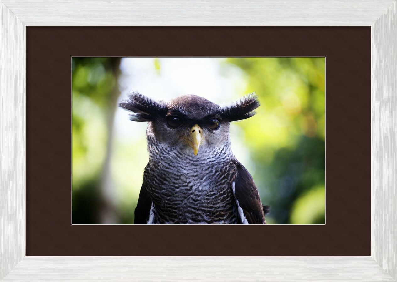 Hibou de Pierre Gaultier, Prodi Art, hibou, tête, fermer, oiseau, animal