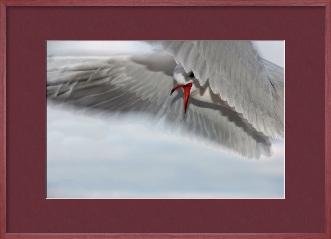 La course de la mouette de Pierre Gaultier, Prodi Art, animal, oiseau, gros plan, mouette