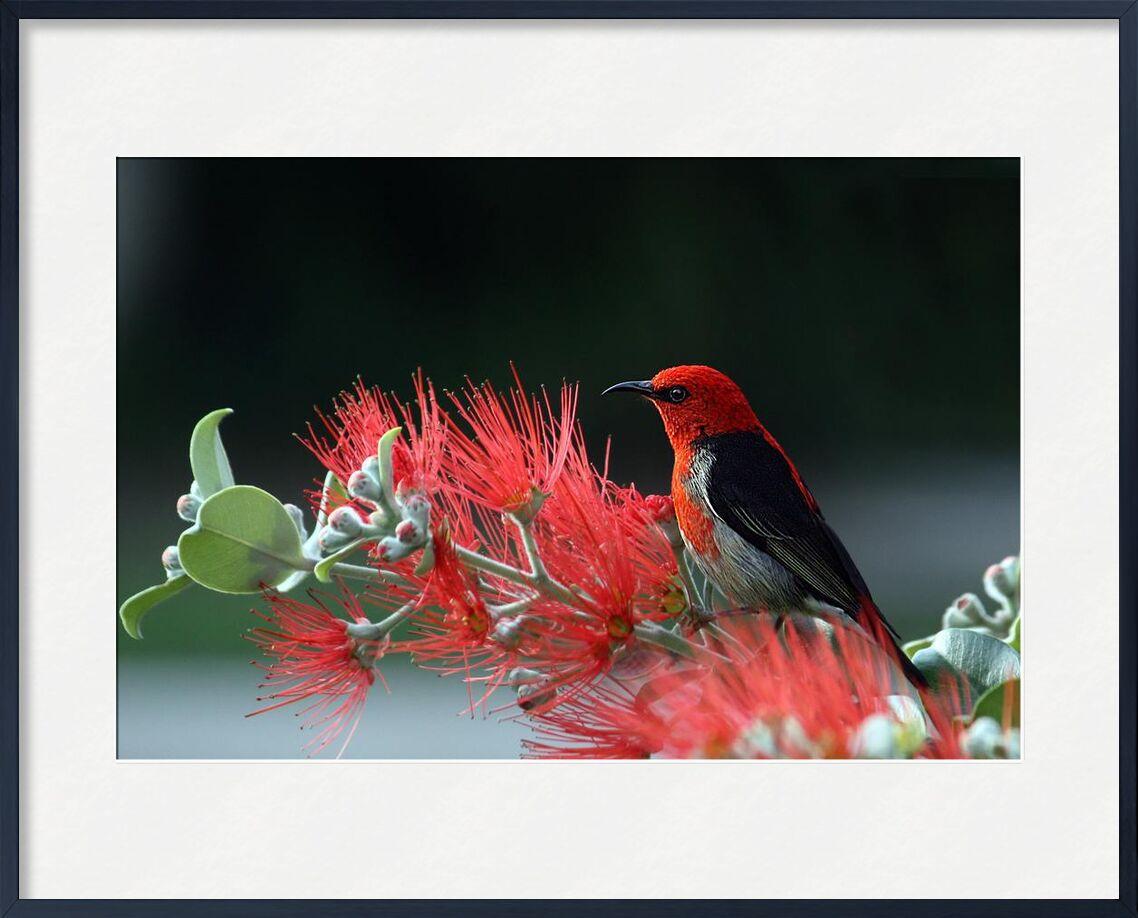 Oiseau sur plante de Pierre Gaultier, Prodi Art, animal, oiseau, plumes, macro, nature, plante, rouge, écarlate, mangeur de miel, faune