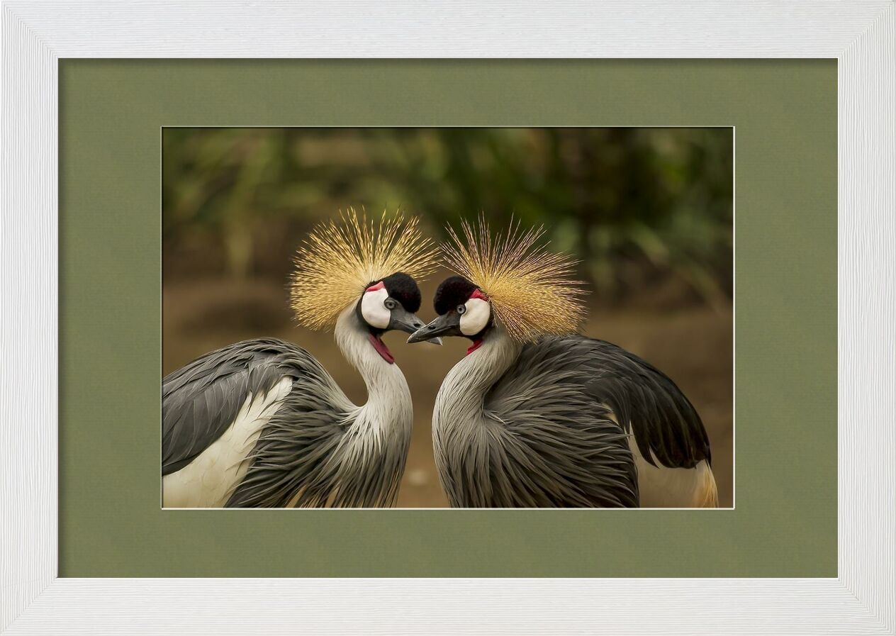 The two nozzles from Pierre Gaultier, Prodi Art, animal, animal world, avian, beak, beautiful, birds, crane, elegant, feather, grey crowned crane, headdress, nature, outdoors, pair, plumage, portrait, wildlife
