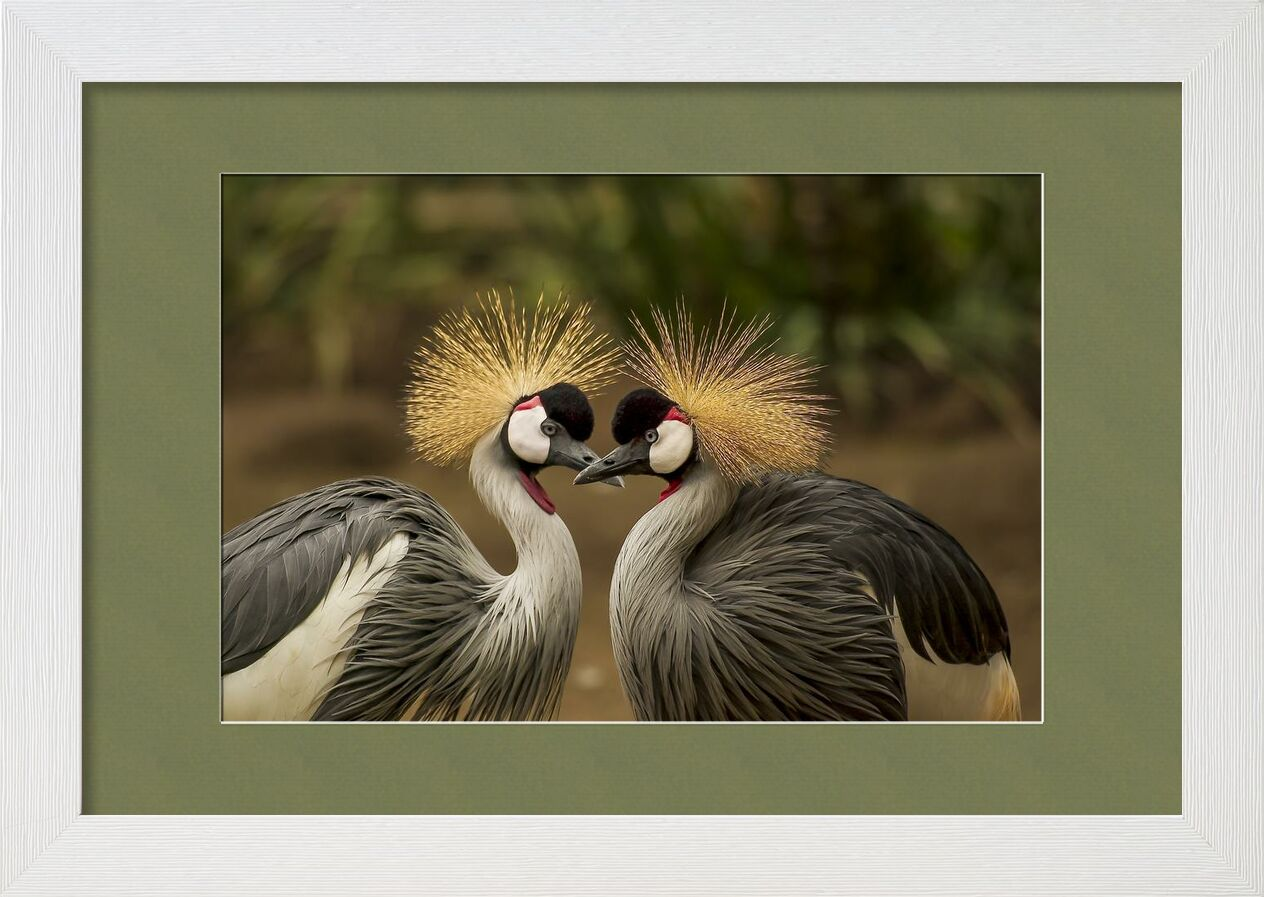 The two nozzles from Pierre Gaultier, Prodi Art, animal, animal world, avian, beak, beautiful, birds, crane, elegant, feather, grey crowned crane, headdress, nature, outdoors, pair, plumage, portrait, wildlife