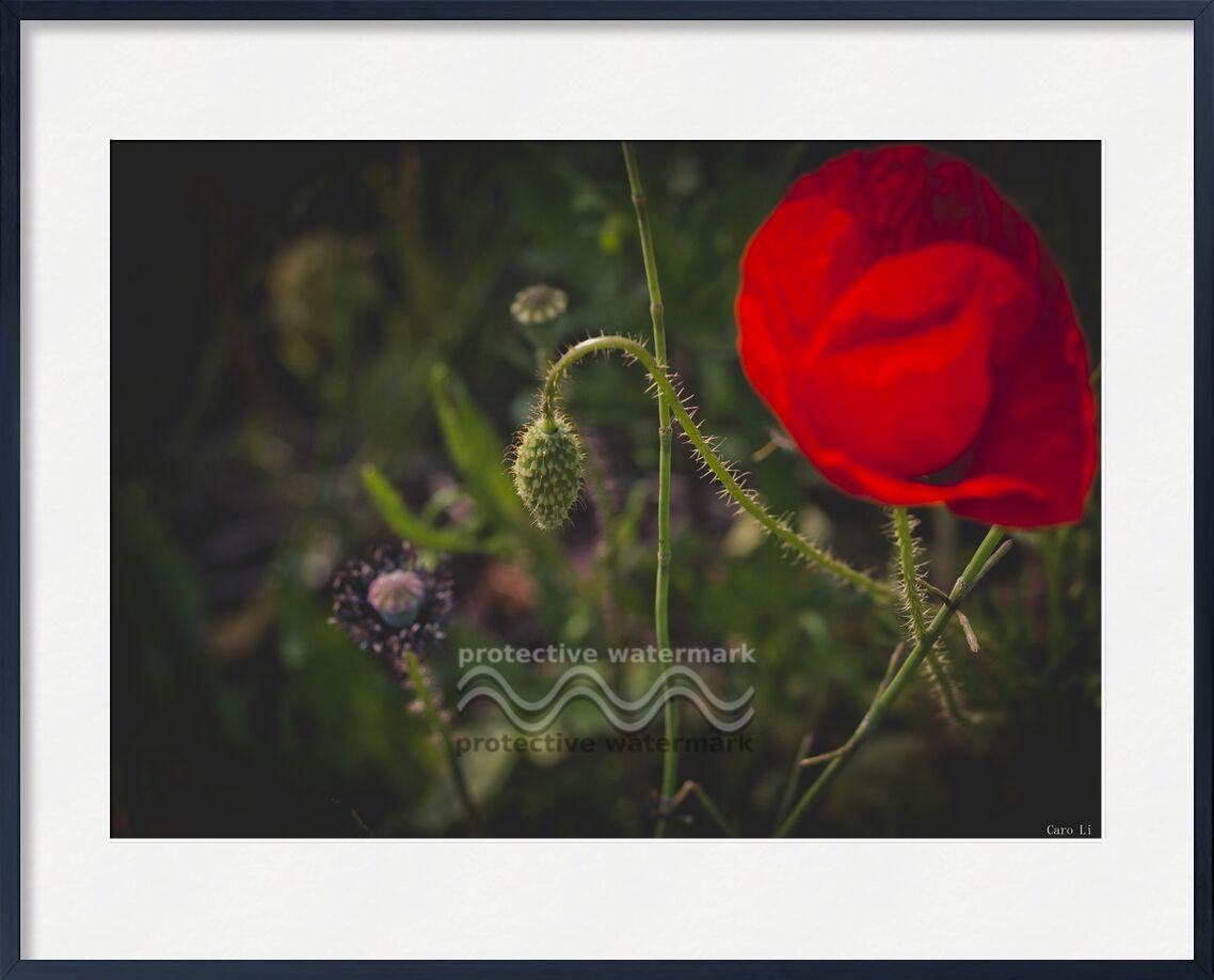 Tulipe de Caro Li, Prodi Art, paysage, nature, fleurs, fleurs, tulipe