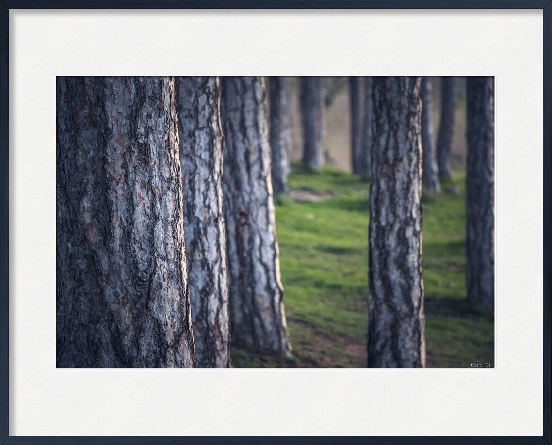 Trees de Caro Li, Prodi Art, paysage, paysage, nature, arbres, des arbres